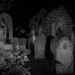 tn_Davis Graveyard 2015-0776-9
