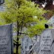davis-graveyard-2011-day-1-3074-2