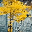 davis-graveyard-2011-day-1-3074-3