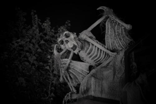 2015-Davis-Graveyard-Night-8702-4