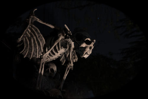 2015-Davis-Graveyard-Night-8716
